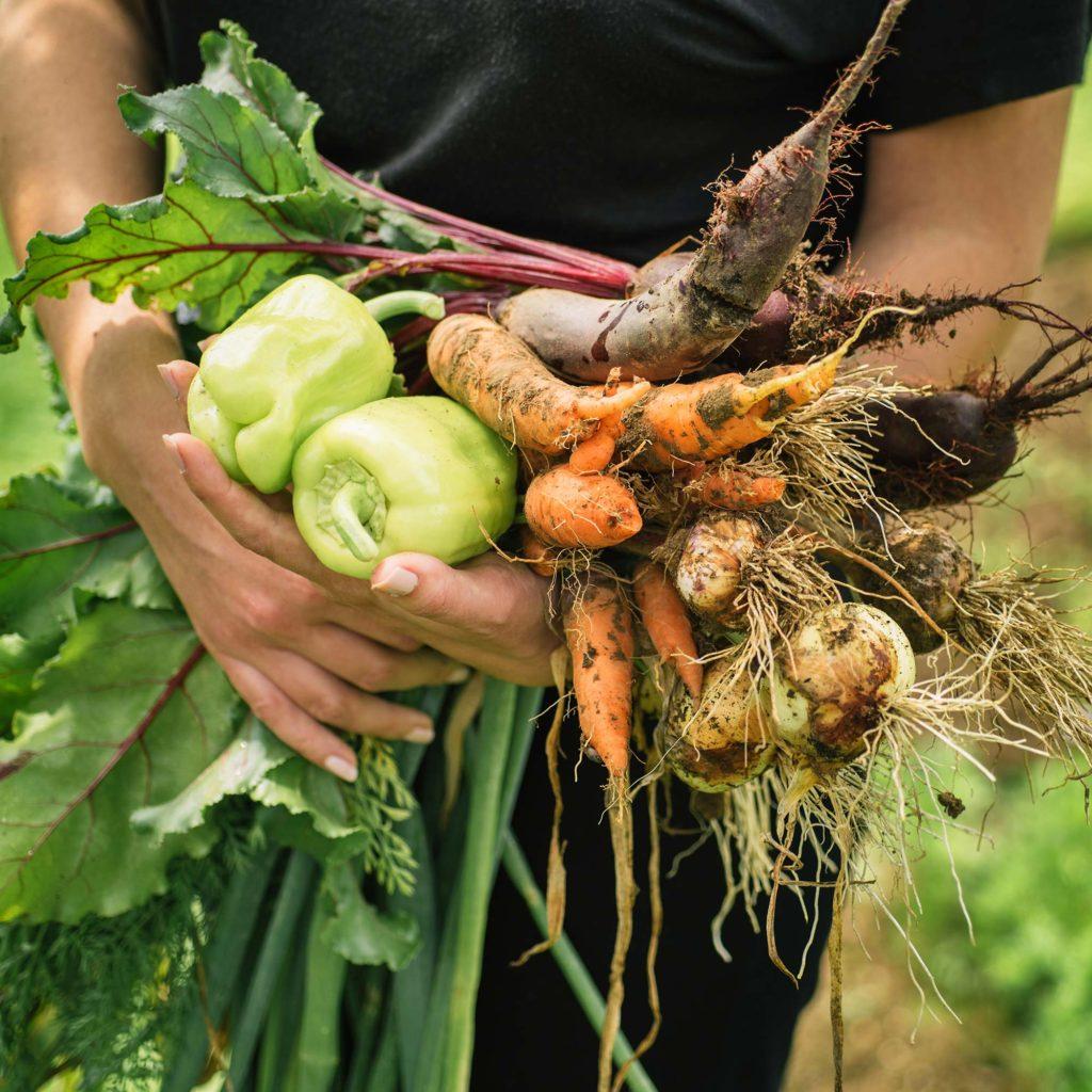 bio-zelenina-pole-dej-si-bio